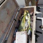 072018 Fishing Report Ocean City Maryland