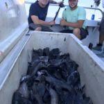 082418 Sea Bass Fishing Report 6