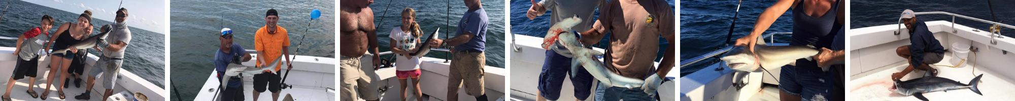 Ocean City Maryland Shark Fishing
