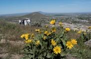 <p>An Annual Spring Wildflower Walk</p>