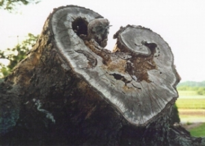 Signs of love in the land (old tree stump)
