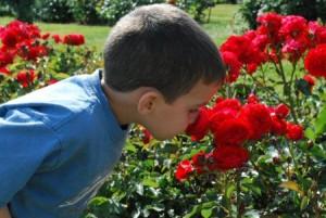 jonny-smelling-roses