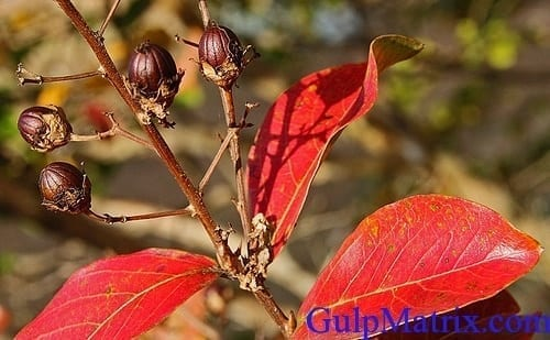 plant pigment photo