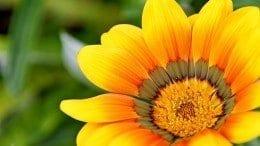 entomophilous flowers