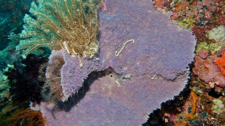 physiology of sponges (purple sponge)