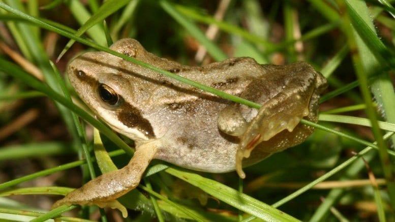 frog metabolism