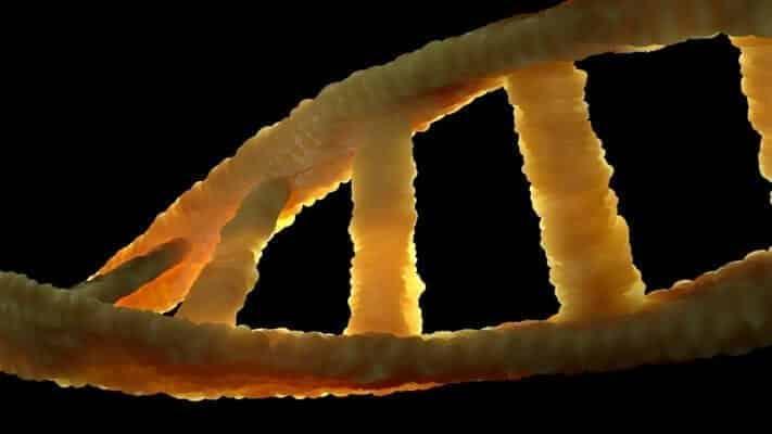 Structure of DNA molecule