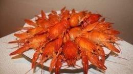 ecdysis in crayfish