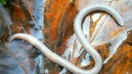 behavior in earthworm