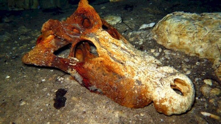river-bottom-bones:-the-strange-world-of-underwater-fossil-hunting