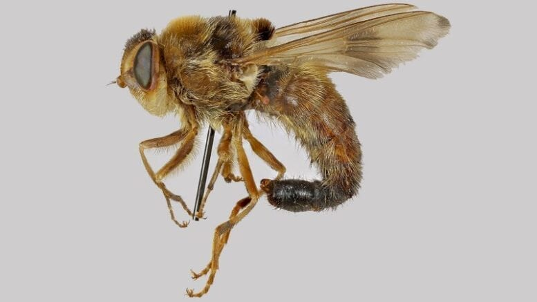 botflies-are-nasty-parasites-that-get-under-your-skin