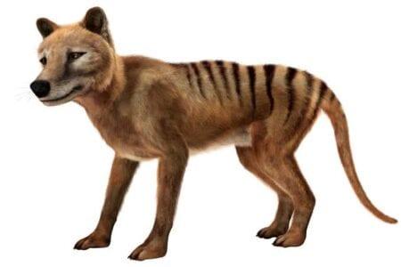 top 6 extinct animals