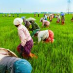 Why India should follow agricultural development-led industrialisation growth model