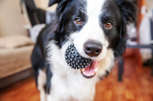 Tips to keeping pets healthy