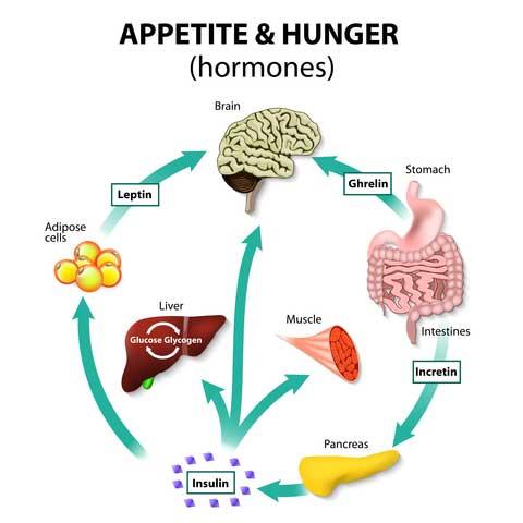 hunger chart