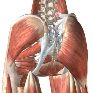 hip-anatomy-2