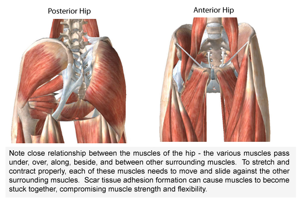 hip-anatomy-layers
