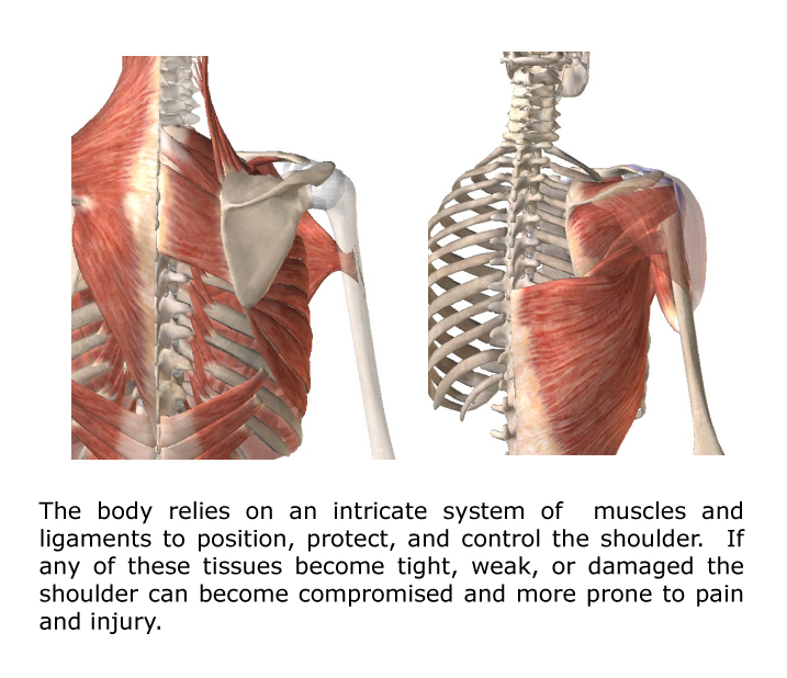 shoulder pain muscles