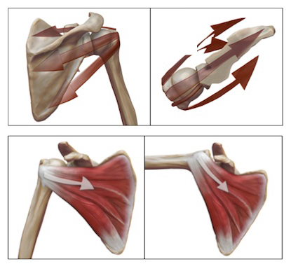 rotator cuff problems - line of action