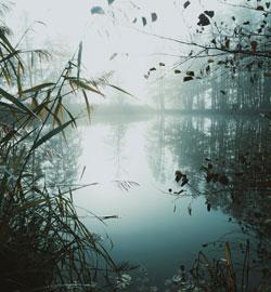 light-landscape-nature-water