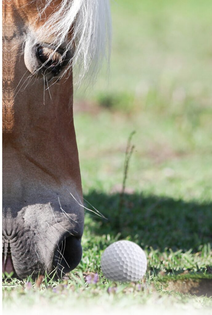 SMILES Mane Event Front image of horse and golf ball