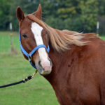 SMILES-Horse-Pictures-2013-