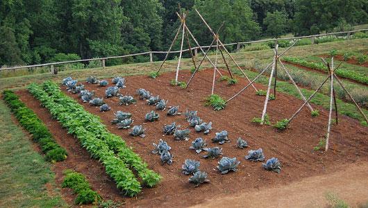 Organic Gardening for New Gardeners