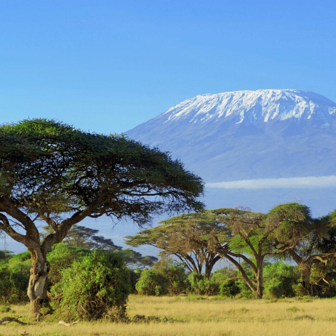 Kilimanjaro_181967831-scaled