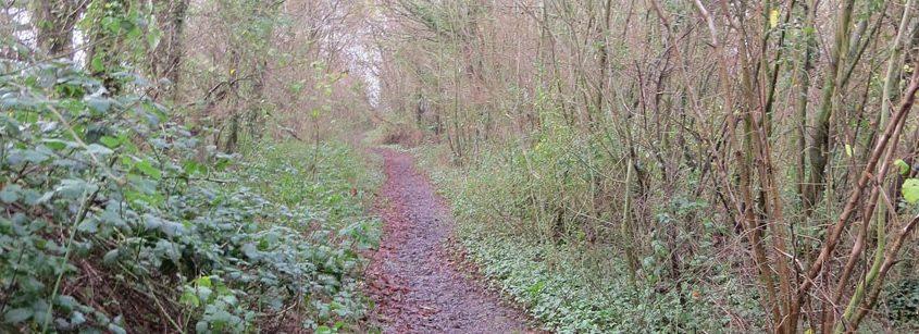 Binstead Wood