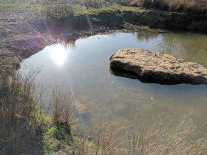 Pig Leg Lane pond