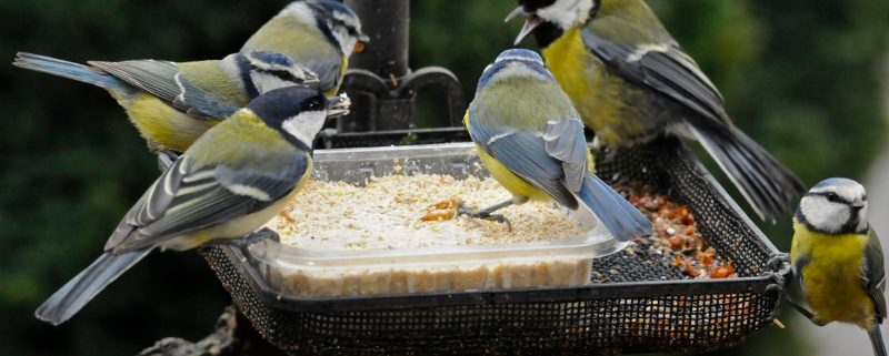 Making your own Bird Feed