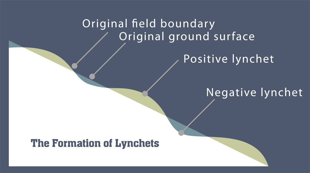 the formation of lynchets