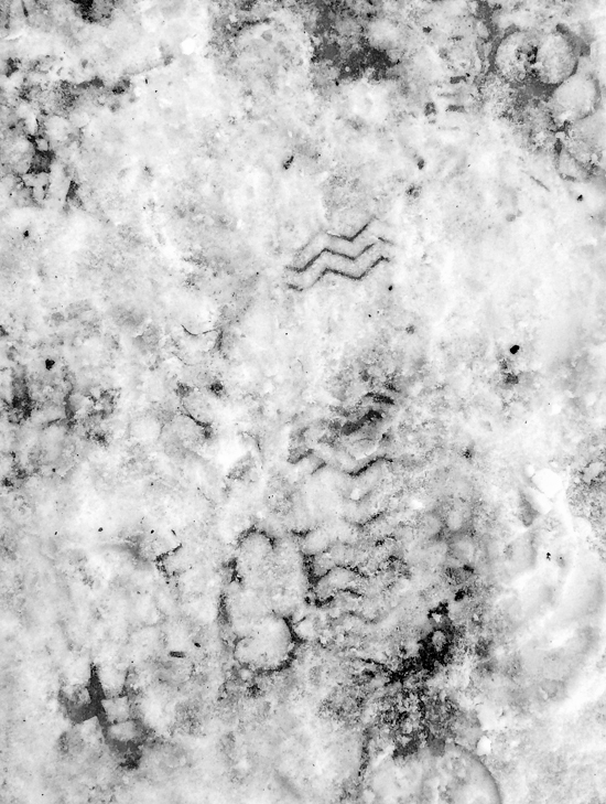 Snowprint_05