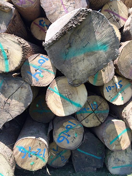 Logs_03