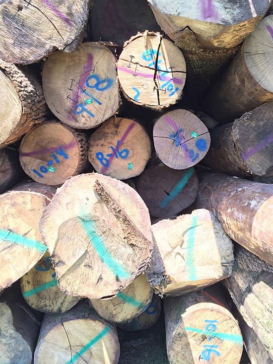 Logs_05