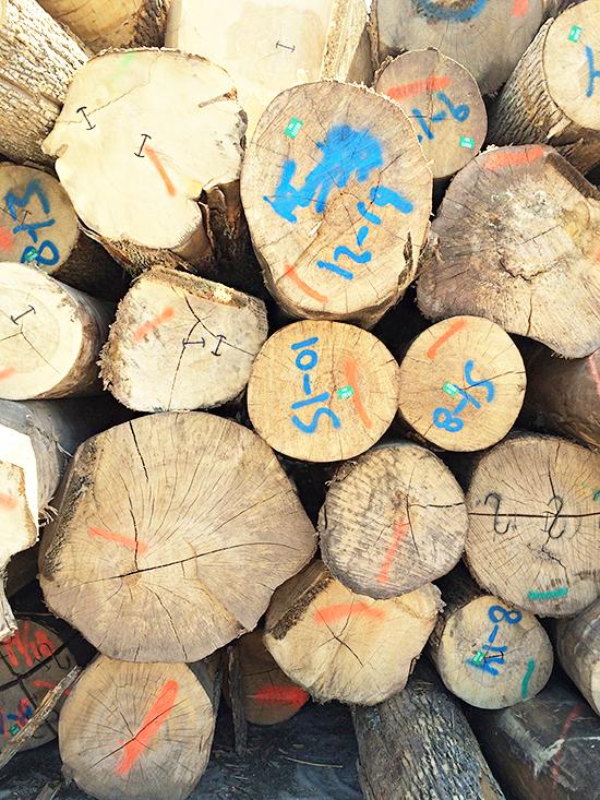Logs_08