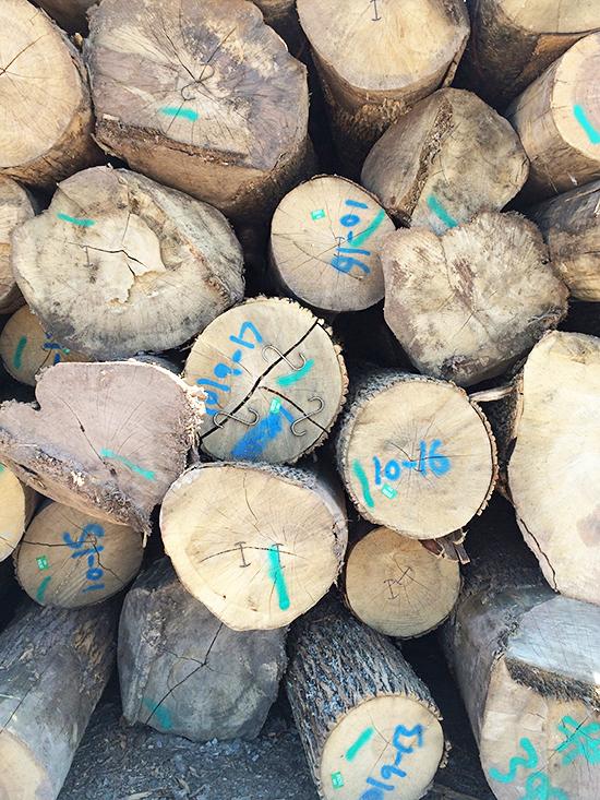 Logs_10