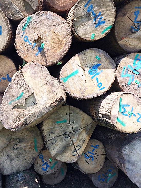 Logs_11