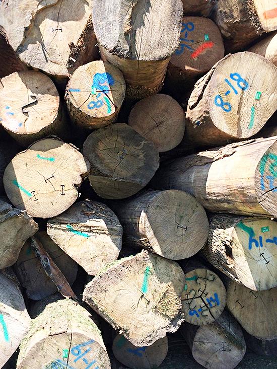Logs_12