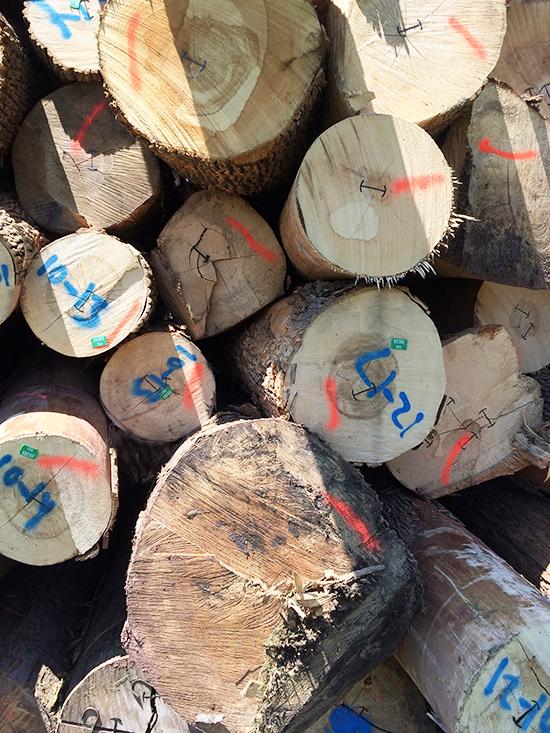 Logs_14