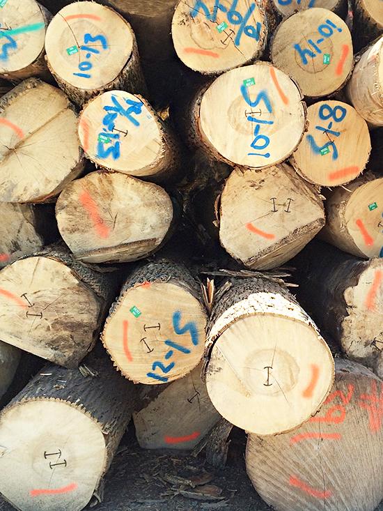 Logs_15