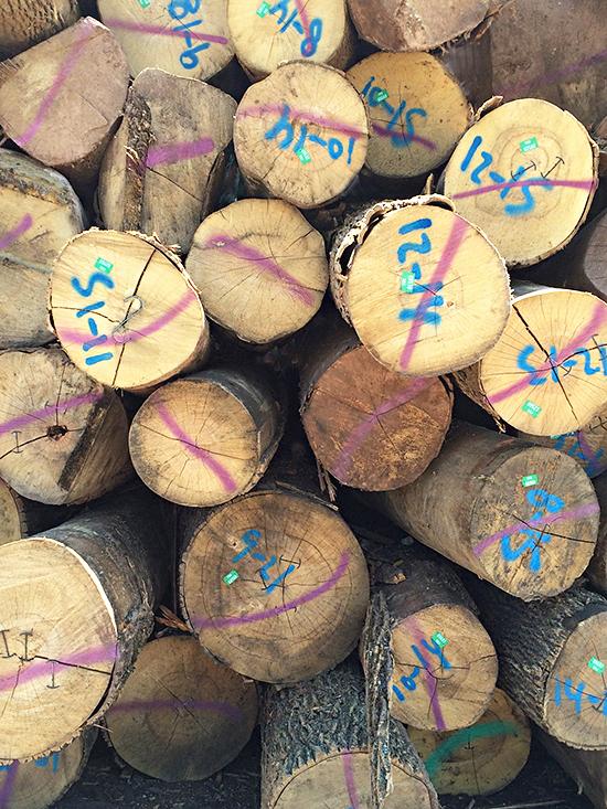 Logs_17