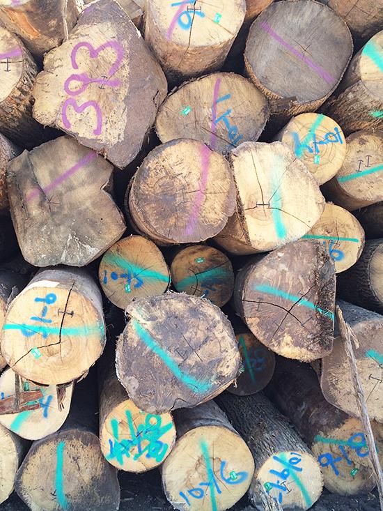 Logs_18