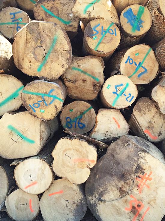 Logs_20
