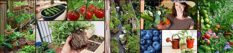 grow organic vegetable gardening