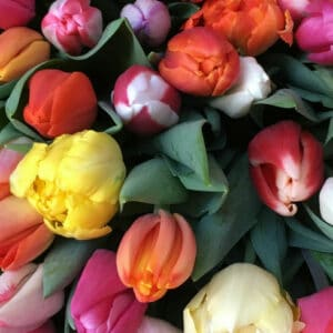 Plant / Flower Week!