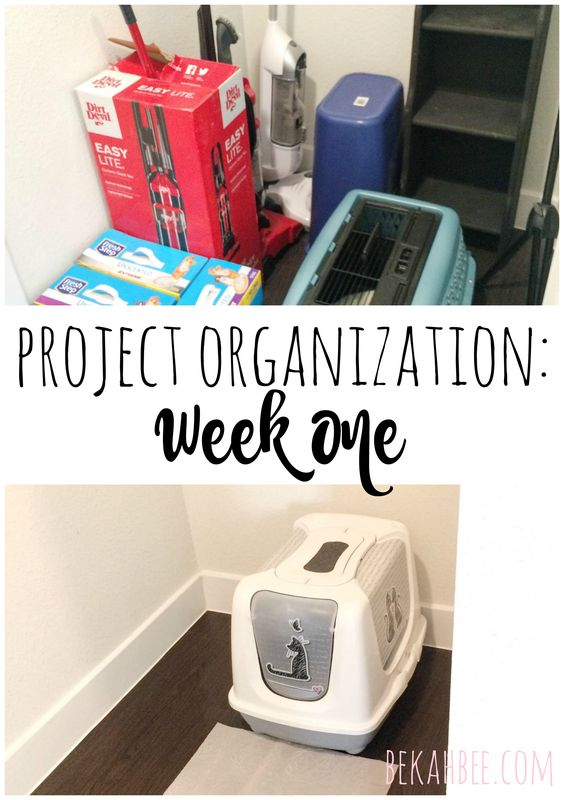 Project Organization: week one