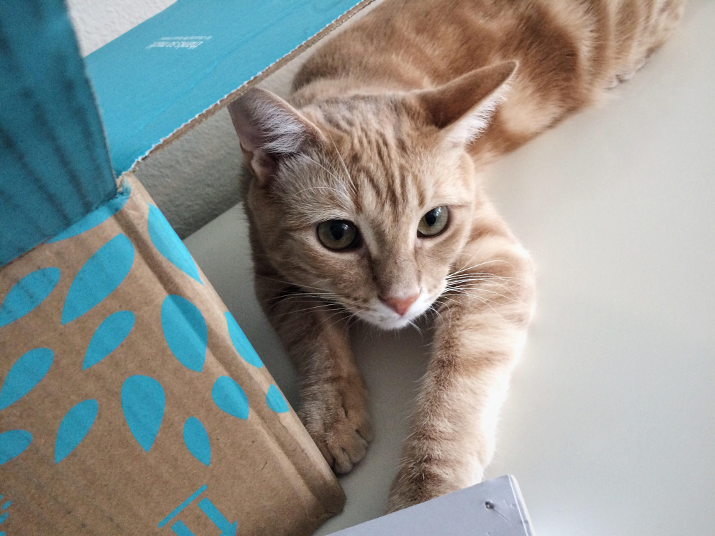 Cute orange cat sitting next to the box looking at the camera