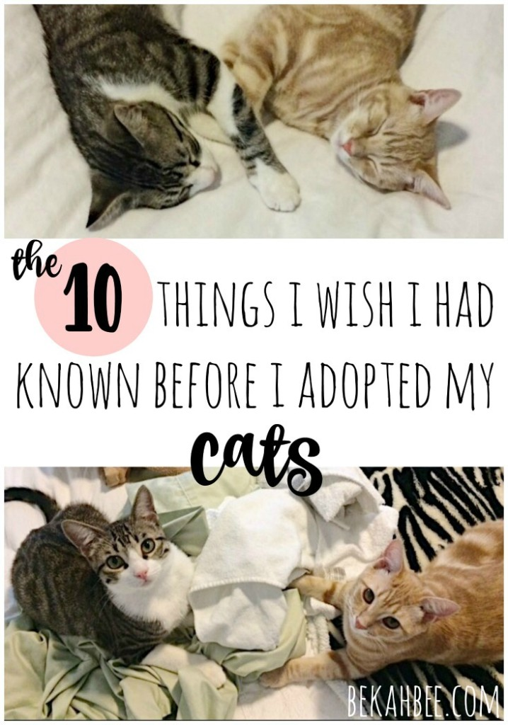 The 10 things I wish I had known before I adopted my cats