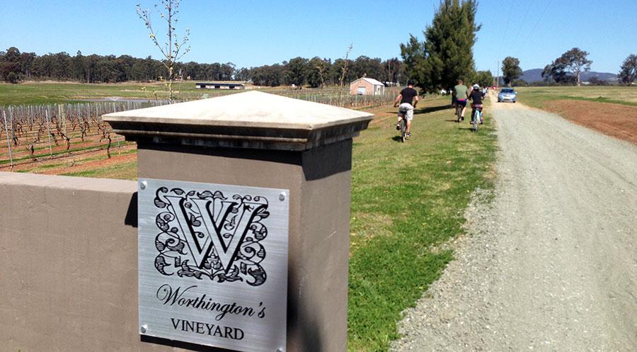 Cycling into Worthington's Vineyard